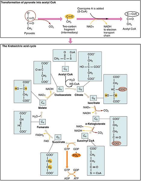 Coa study guide