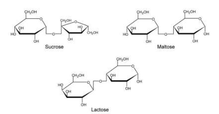 Common disaccharides