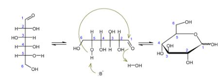 Interconversion of Linear and Cyclic Carbohydrates