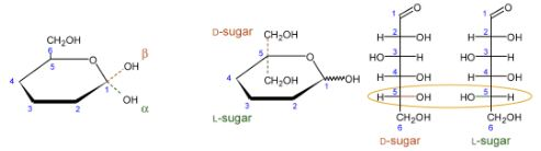 Determining the Absolute Configuration of Saccharides
