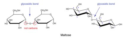 Maltose is O-linked Disaccharide of Two Glucose Molecules