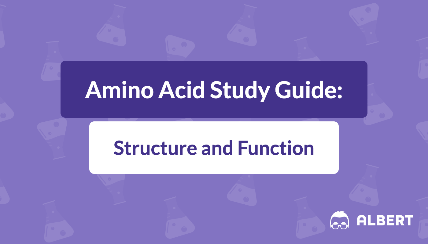 Amino Acid Study Guide Structure And Function Manual Guide